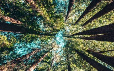 ¿Quién paga los servicios que proporciona el bosque?